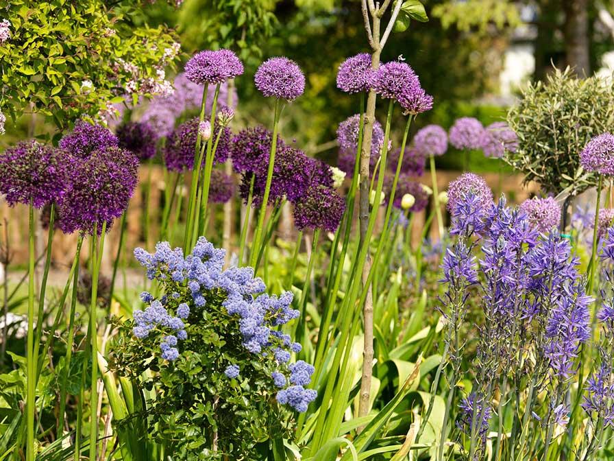 Bloemen in een tuin